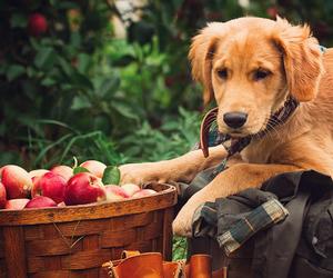 blog, dog, and fashion image