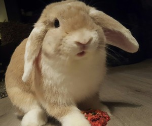 bunny, fluffy, and liefde image