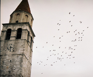 birds, torre, and tower image