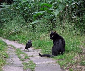 amigos, bird, and cat image