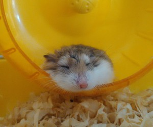 fofo, hamster, and minnie image