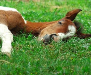 animals, grass, and horse image