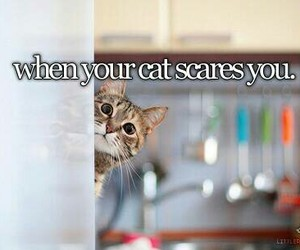 cat, funny, and joy image