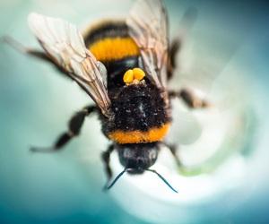 تفسير رؤيا النحل للبنت العزباء رؤية نحله في الحلم