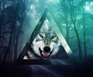 tumblr and wolf image