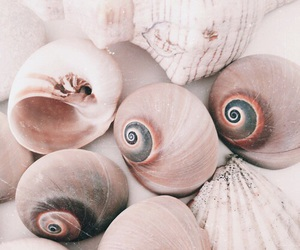 shell, pink, and theme image