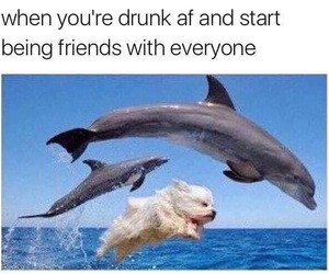 funny, drunk, and dolphin image