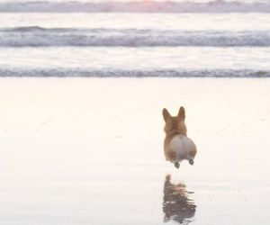 dog, beach, and animal image