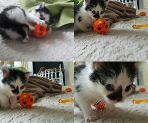 cats, kitten, and play image