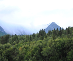 forest, nature, and norway image