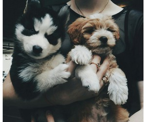 alternative, puppy dogs, and tumblr image