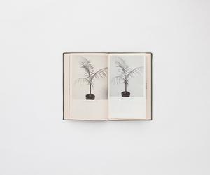 plants, book, and minimalism image