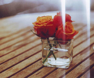 flowers, photography, and rose image