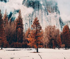 mountains, tree, and nature image