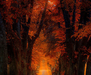 colors, fall colors, and road image