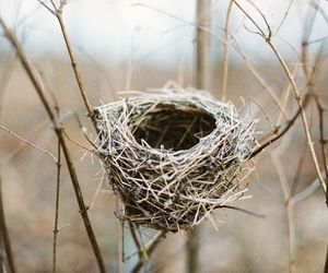 nest and bird image