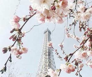 flowers, paris, and spring image