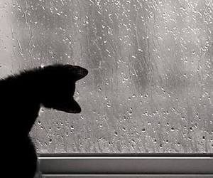 cat, rain, and window image