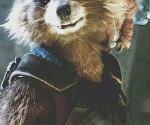 rocket, awwws, and groot image
