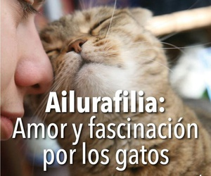 amor, cats, and phrases image