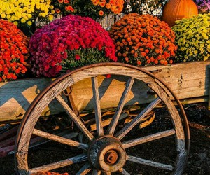 colorful, flowers, and rustic image