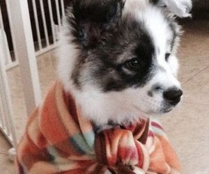 adorable, blanket, and puppy image