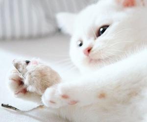 animals, cat, and kitten image