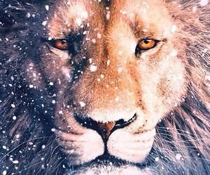 narnia, lion, and aslan image