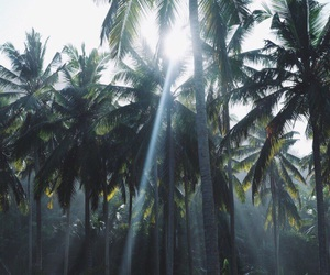 nature, palms, and green image