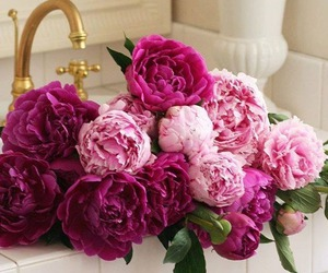 peonies, beautiful, and flowers image