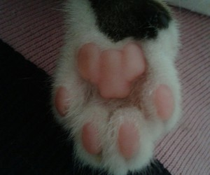 Image by Cats
