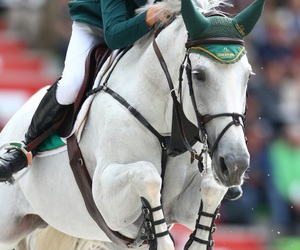 allen, competition, and horseriding image