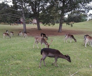 animals, deer, and nature image