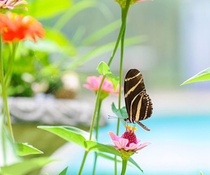 butterfly, colors, and flowers image