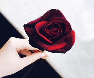 beauty, it, and rose image