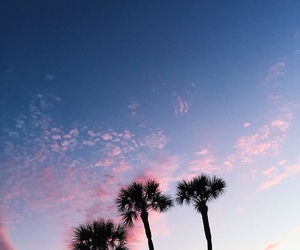 sky, sunset, and palm trees image