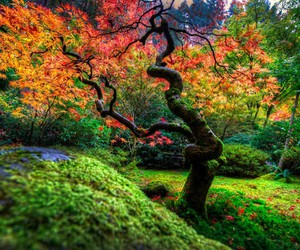 autumn, garden, and color image