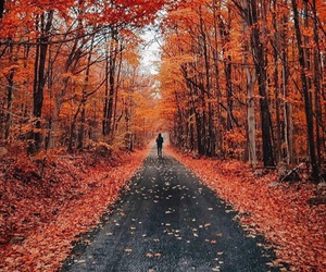 autumn, tumblr, and weheartit image
