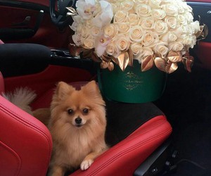 adorable, flowers, and luxury image