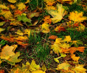 autumn, yellow, and leafs image