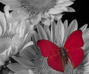 butterfly, color, and color popping image