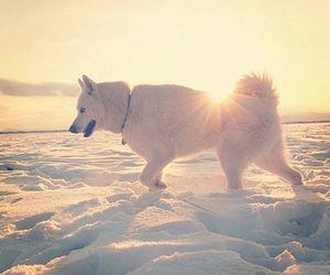 beautiful, dog, and winter image