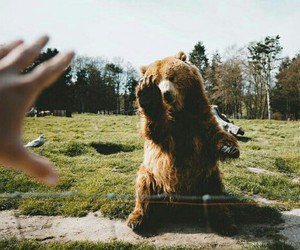 animals and bears image