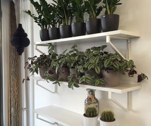 black, cactus, and decor image