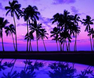 beach, palms, and purple image
