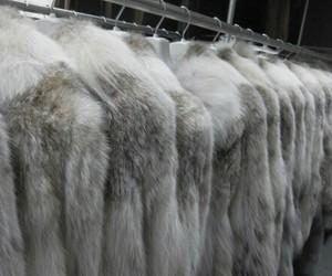 fashion, fur, and pale image