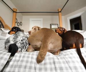 dog, animal, and baby animals image