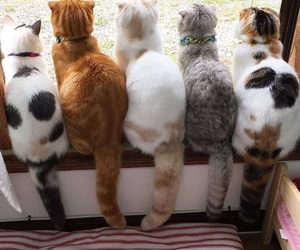 cat, animal, and kitty image