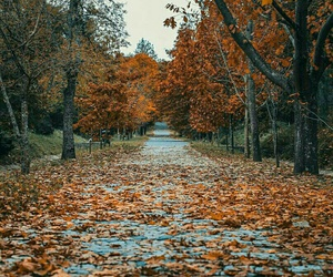 leaves, autumn, and trees image