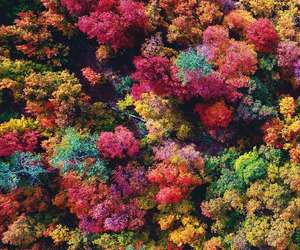 tree, colors, and forest image